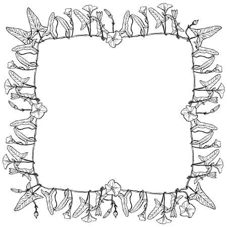 bindweed: bindweed floral square frame, border wreath for your text branch with leaves buds and flowers contours isolated on white background hand-drawn. Vector illustration Illustration