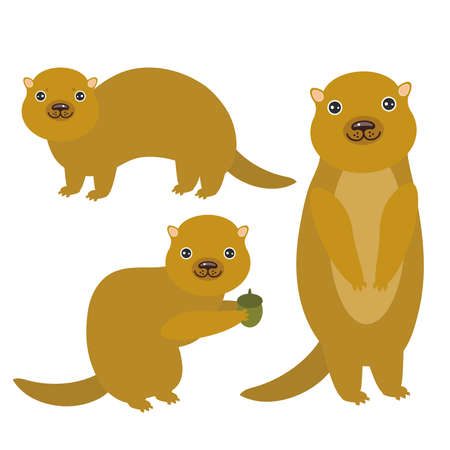 gopher: Set of funny Gopher ground squirrel isolated with acorn on white background. Vector illustration Illustration