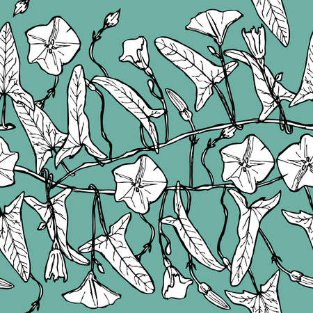 bindweed: branch with leaves buds and flowers bindweed floral seamless pattern Leaves contours on light green blue background hand-drawn. Vector illustration