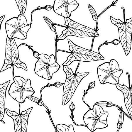 bindweed floral seamless pattern branch with leaves buds and flowers contours isolated on white background hand-drawn. Vector illustration Ilustração