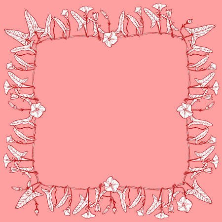 bindweed: bindweed floral square frame, border wreath for your text branch with leaves buds and flowers contours on pink red burgundy background hand-drawn. Vector illustration