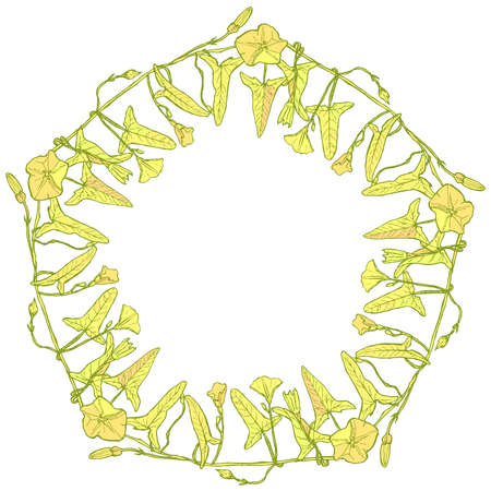 bindweed: branch with leaves buds and flowers bindweed floral pentagonal frame, border wreath for your text yellow light green Leaves contours isolated on white background hand-drawn. Vector illustration Illustration