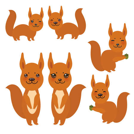 Set of funny red squirrels with fluffy tail with acorn isolated on white background. Vector illustration