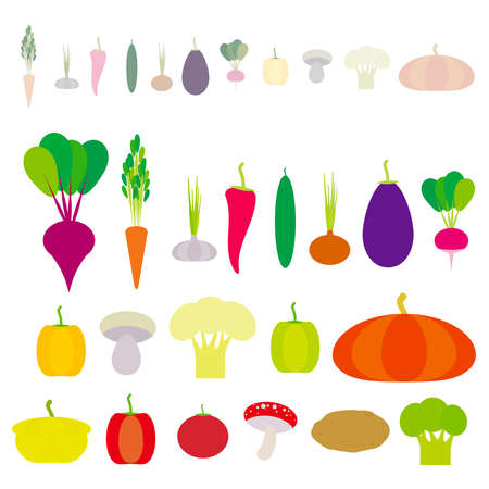 Set of vegetables bell peppers, pumpkin, beets, carrots, eggplant, red hot peppers, cauliflower, broccoli, potatoes, mushrooms, cucumber, onion, garlic, tomato, radish isolated on white. Vector illustration