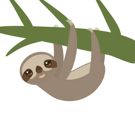 Three-toed sloth on green branch on white background vector illustration Illustration