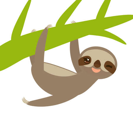 Funny and cute smiling Three-toed sloth on green branch, isolated white background vector illustration