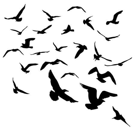 Seagulls black silhouette on white background. Vector illustration