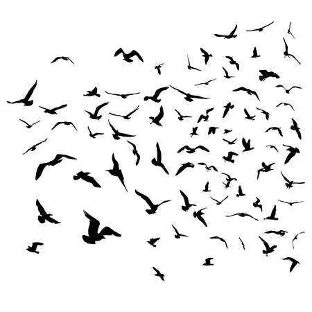 Seagulls black silhouette on isolated white background. Vector illustration