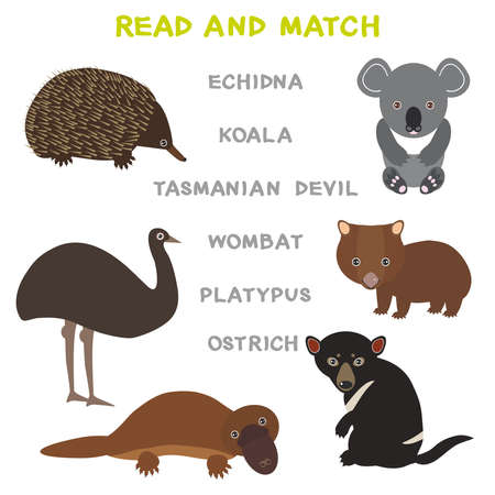 Kids words learning game worksheet read and match. Funny animals ostrich echidna platypus koala wombat tasmanian devil Educational Game for Preschool Children Picture puzzle. Vector illustration Illustration