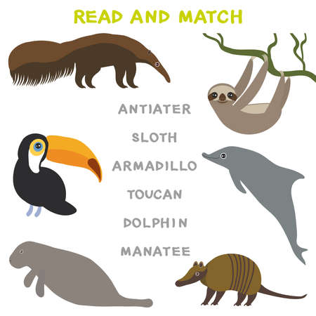 Kids words learning game worksheet read and match. Funny animals Armadillo Anteater Sloth Toucan Dolphin Manatee Educational Game for Preschool Children Picture puzzle. Vector illustration