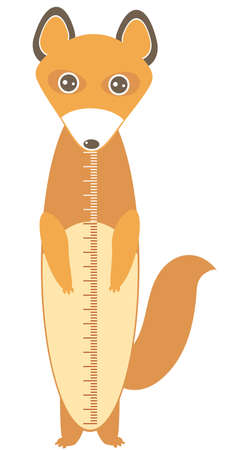 cute fox with funny face and fluffy tails isolated on white background. Children height meter wall sticker, kids measure. Vector illustration Illustration