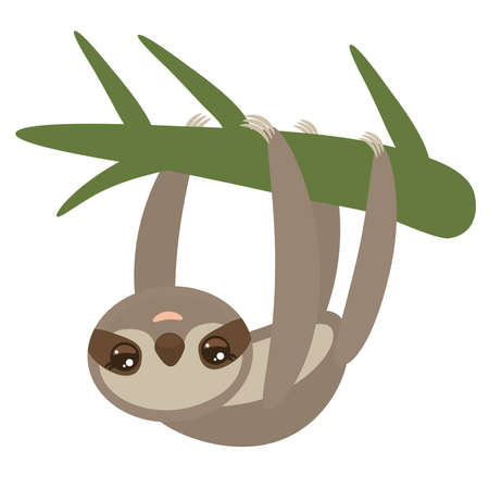 Three-toed sloth on green branch on white background. Vector illustration