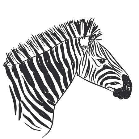 Black and White Zebra portrait vector illustration