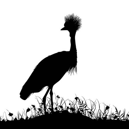Grey crowned crane, Black crowned crane stands on land with grass and flowers black silhouette isolated on white background. banner template, card design. Vector illustration