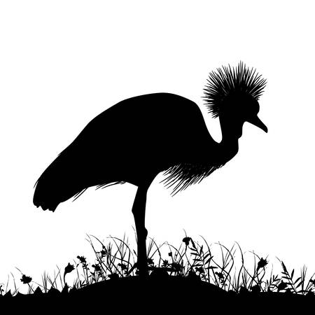 Grijze gekroonde kraan, zwarte gekroonde kraan staat op het land met gras en bloemen zwart silhouet geïsoleerd op een witte achtergrond. sjabloon voor spandoek, kaart ontwerp. Vector illustratie