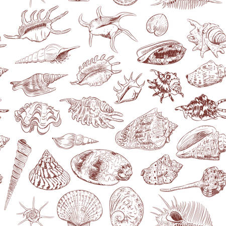 seamless pattern Unique museum collection of sea shells rare endangered species, molluscs Gastropoda Bivalvia Venus comb murex Corculum cardissa Muricidae Brown contour on white background. Vector illustration