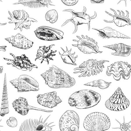 seamless pattern Unique museum collection of sea shells rare endangered species, molluscs Gastropoda Bivalvia Venus comb murex Tridacna squamosa Muricidae black contour on white background. Vector illustration