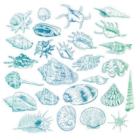Unique museum collection of sea shells rare endangered species, molluscs Bivalvia Venus comb murex Corculum cardissa Tridacna squamosa Muricidae blue green contour on white background. Vector illustration