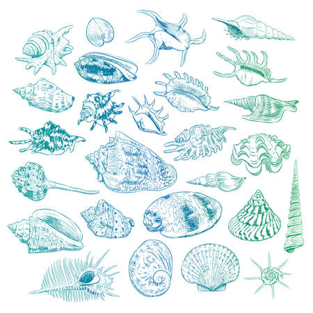 Unique museum collection of sea shells rare endangered species, molluscs Bivalvia Venus comb murex Corculum cardissa Tridacna squamosa Muricidae blue green contour on white background. Vector illustration