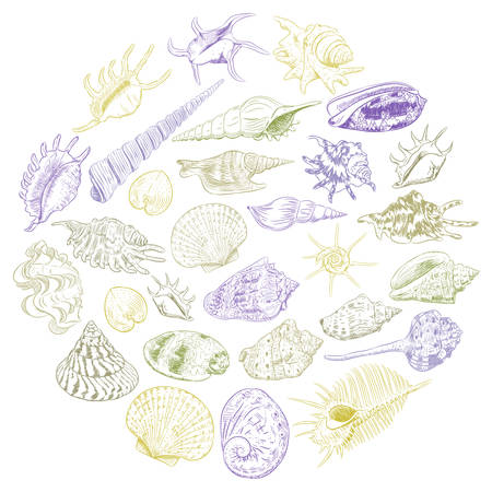 Round composition Summer concept with Unique museum collection of sea shells rare endangered species, molluscs Khaki brown purple contour on white background. card banner design. Vector illustration