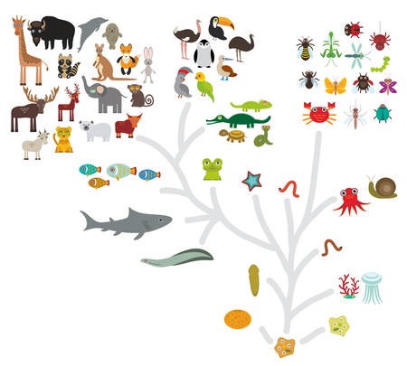 Evolution scale from unicellular organism to mammals. Evolution in biology, scheme evolution of animals isolated on white background. childrens education, science. Vector illustration Illustration
