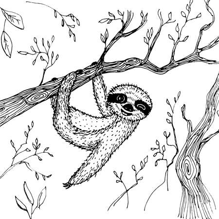 funny and cute smiling Three-toed sloth wink on branch isolated on white background. sketch, drawing by hand. Vector illustration Illustration
