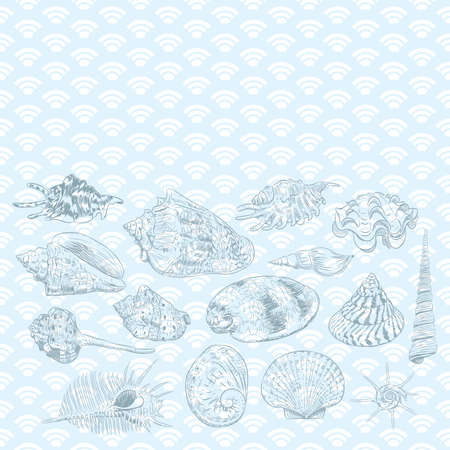 Summer concept with Unique museum collection of sea shells rare endangered species, molluscs black contour on blue background. card banner design with space for text. Vector illustration