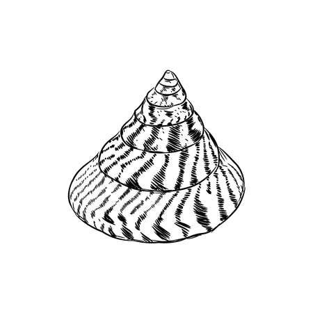 Summer concept with Unique museum sea shells sea snails. Sketch black contour isolated on white background. Vector illustration Ilustração