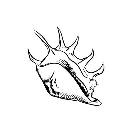 Lambis, common name the spider conch, is a species of large sea snail, a marine gastropod mollusk in the family Strombidae, the true conchs. Sketch black contour isolated on white background. Vector illustration