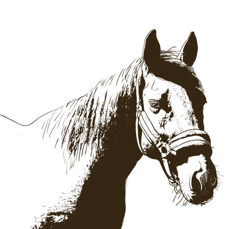horse portrait, bridle on head, snaffle headband isolated brown color on white background. sketch, outline, draft drawing, Image for design and tattoo. Vector illustration