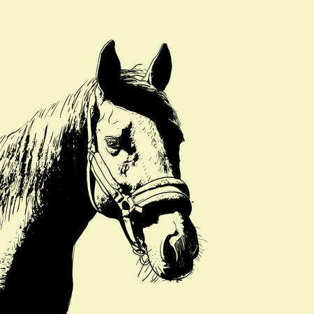 horse portrait, bridle on head, snaffle headband isolated brown color on beige background. sketch, outline, draft drawing, Image for design and tattoo. Vector illustration Иллюстрация