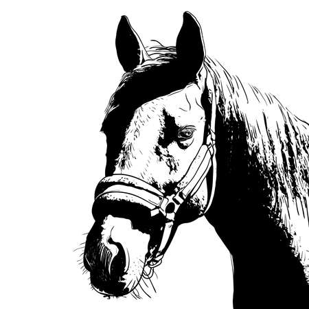 horse portrait, bridle on head, snaffle headband isolated black color on white background. sketch, outline, draft drawing, Image for design and tattoo. Vector illustration