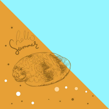 Hello summer card banner. sea shells Volutidae, common name volutes, are a taxonomic family of predatory sea snails shell. Sketch contour on blue ocher beige background. Vector illustration