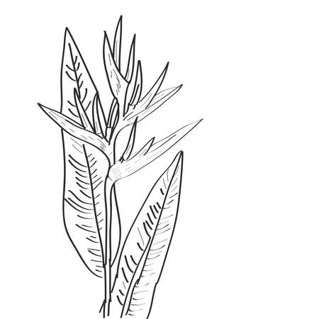 Strelitzia flowers leaf sketch, black contour isolated on white background. simple art, Can be used for Card banner template, copy space. Vector illustration