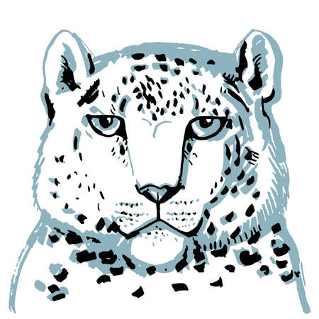 snow leopard ounce, large cat native to the mountain ranges of Asia ranging from eastern Afghanistan to Mongolia and western China. Gray sketch markers, freehand drawing isolated on white. Vector illustration