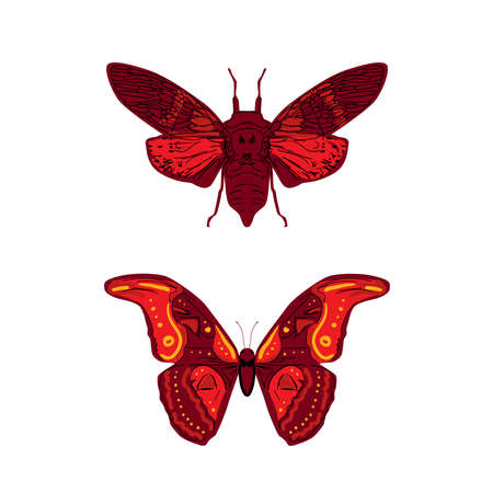 butterfly cicadas sketch, yellow orange mustard contour isolated on white background. simple art. Vector illustration