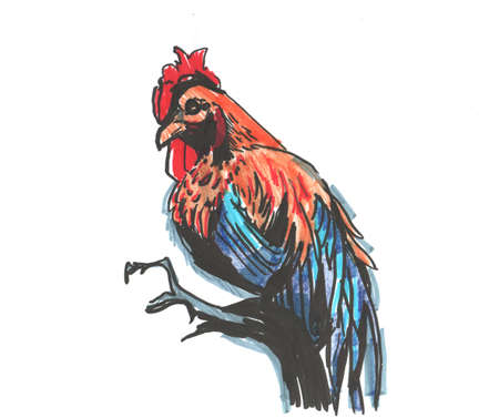 Bright red blue cock rooster with a comb. sketch markers, freehand drawing 版權商用圖片