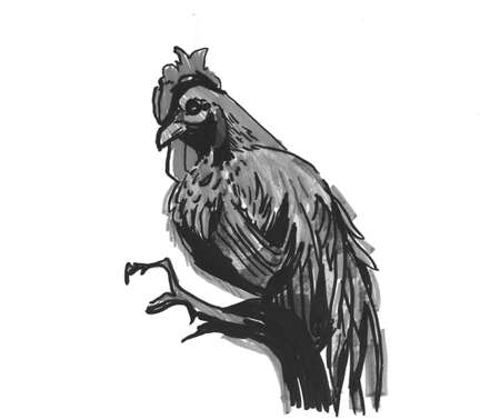 cock rooster with a comb. sketch markers, freehand drawing isolated on white background
