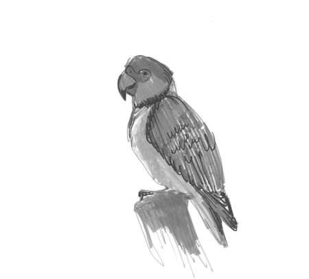 Senegal parrot Poicephalus senegalus from west Africa sketch markers, freehand drawing isolated on white background