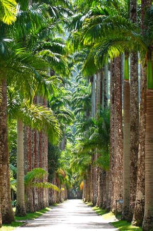Botanical garden  Rio de Janeiro Stock Photo - 12990296