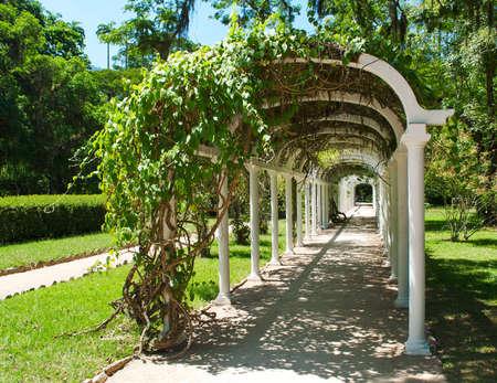 Pergola in Botanical Garden in Rio de Janeiro  Brazil