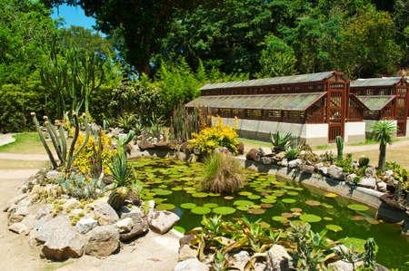 Botanical garden  Rio de Janeiro photo