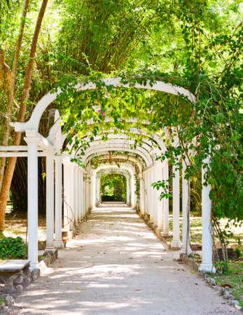 Pergola in Botanical Garden in Rio de Janeiro  Brazil photo