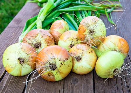Fresh onion on wooden table Stock Photo