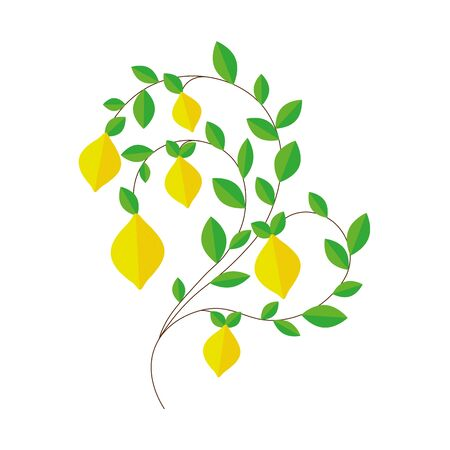 lemon tree branch. yellow lemons. green leaves Ilustração