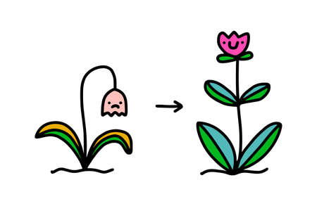 Plant with flower before and after care support hand drawn vector illustration in cartoon doodle style