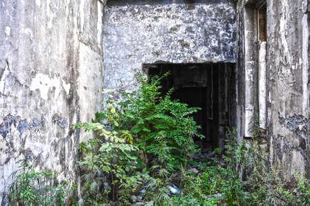 lejano oriente: Ruinas del edificio en mal estado cubierta por la vegetaci�n. Hay una gran cantidad de vegetaci�n en el interior del edificio abandonado. La foto fue hecha en un pueblo lejano de Lejano Oriente de Rusia. Foto de archivo