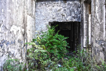 the far east: Ruins of shabby building covered by vegetation. There are a lot of vegetation inside of the derelict building. Photo was made in a distant town of Far East in Russia.