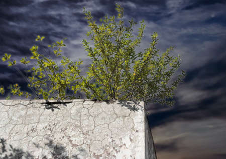 living thing: Lonely green bush on the concrete wall. It?s a good example of vital force. Every living thing want to survive, even if there are no good conditions for life, only lifeless concrete around. Some lighting effects made the picture more expressive.