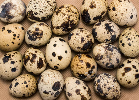 dietetic: Spotty quail eggs as food background. Quail egg is very health-giving and dietetic food. Stock Photo